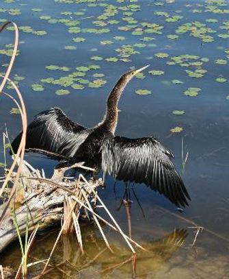 a-heron-in-the-marsh.jpg