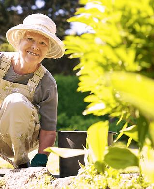senior-gardening.png