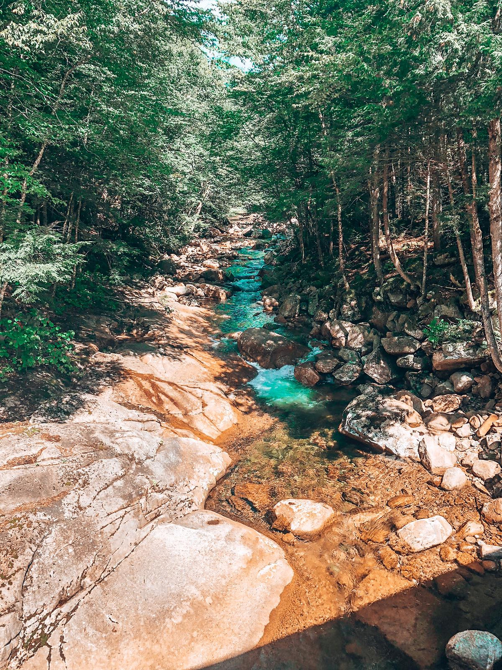 A forest stream in the White Mountains