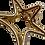 Thumbnail: Piranha Metal Estrela