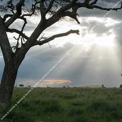 """Valéria Khouri - """"Facho de luz"""" (dupla)"""