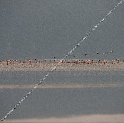 """Valéria Khouri - """"Flamingos"""" (dupla)"""