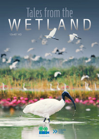Tales from the Wetland