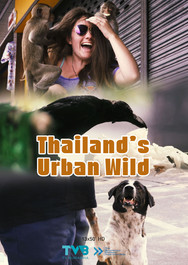 Thailand's Urban Wild