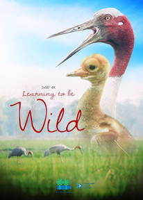 Learning to be Wild