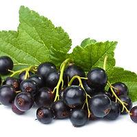 cassis-fruit.jpg