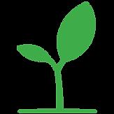 Kauri-leaf.png