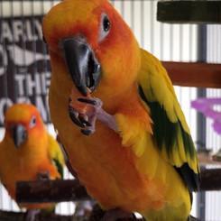 Chloe & Mango