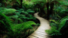 green-nature-jungle-path-trial-1920x1080