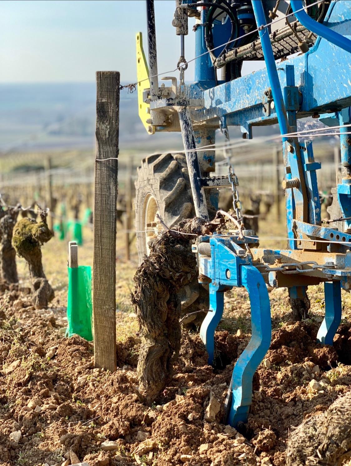 Labour des vignes