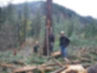 Logging picture 2.jpg