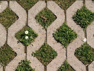 Comment me débarrasser des mauvaises herbes sans pesticides ?