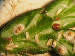 Mes plantes sont attaquées par des pucerons, cochenilles, acariens et autres insectes nuisibles ! Qu