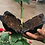 Thumbnail: PLANT ROOTING DEVICE SMALL