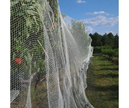 Bird Netting 5x10m