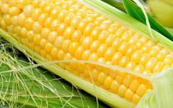 maíz.jpg
