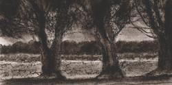 Trees I RUTH GROSSMAN