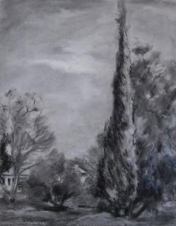 Cypress Tree next to the Studio