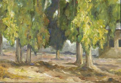 Grove of Eucalyptus I RUTH GROSSMAN