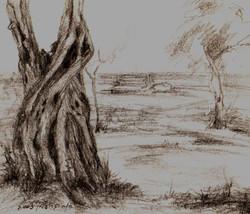 Olive Tree I RUTH GROSSMAN