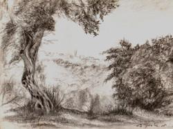 Olive Tree against JerusalemI RUTH G