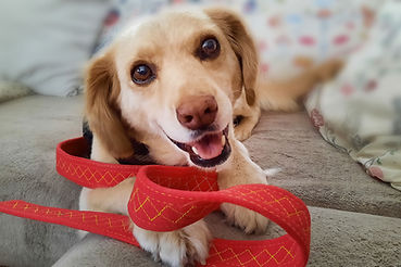 Dog-Tug Hundespielgurt Design