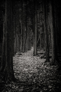 Lonely Path V