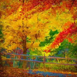 Autumn's Warmth