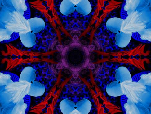 Swan_RedStream_KLADSS_12_1000.jpg
