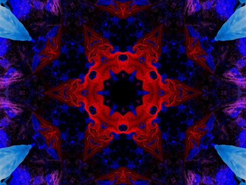 Swan_RedStream_KLADSwanWRL_01_1000.jpg