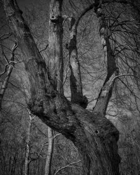 Handy Tree to Have Around