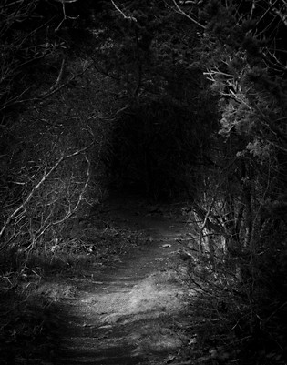 Lonely Path IV