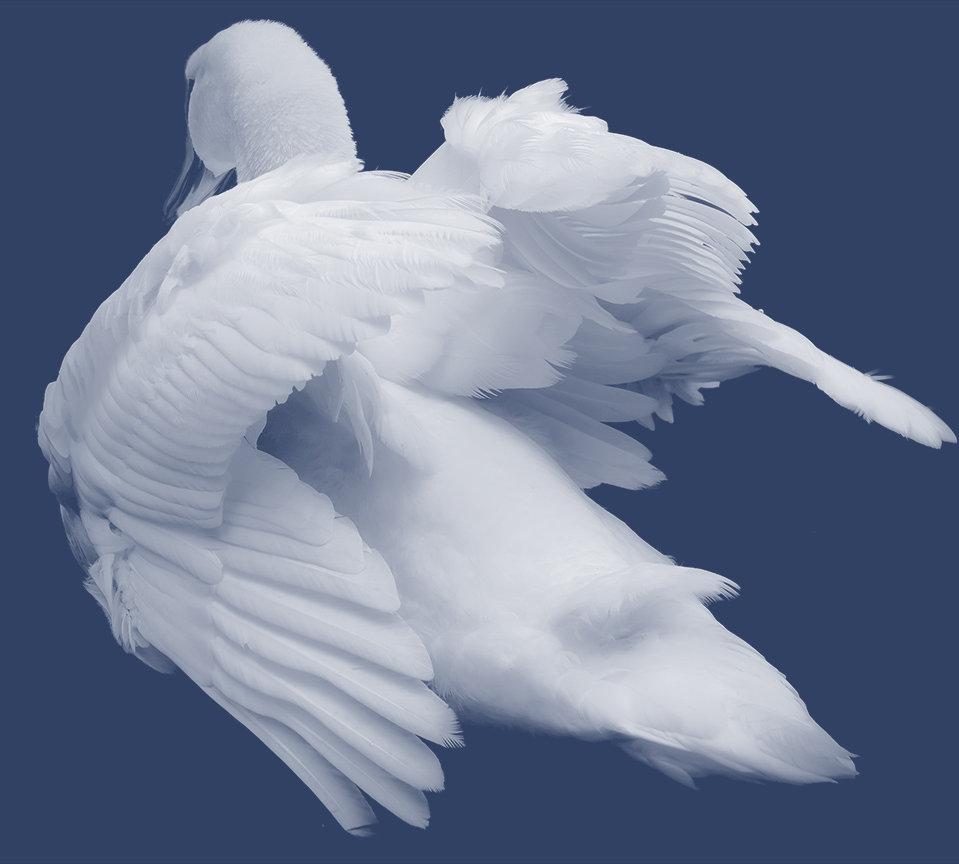 Alabaster Swan girardesign.com