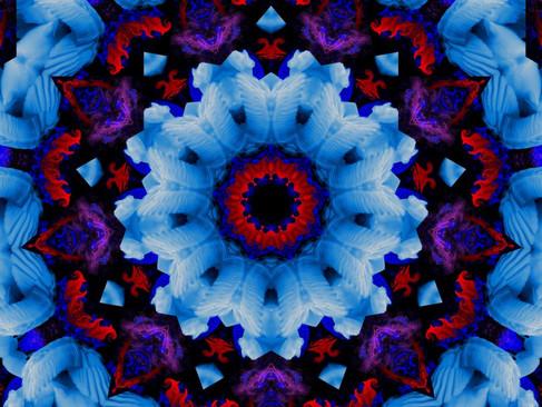 Swan_RedStream_KLADRP_08_1000.jpg