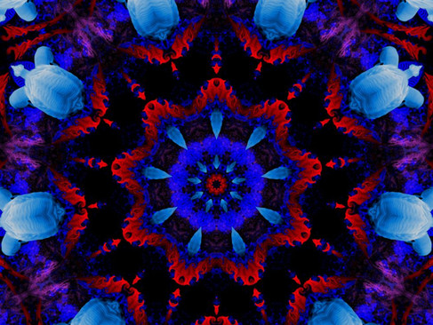 Swan_RedStream_KLADRP_07_1000.jpg