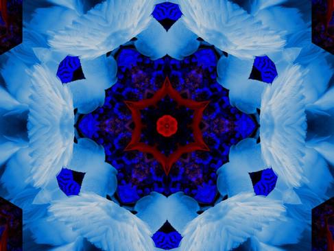 Swan_RedStream_KLADSS_25_1000.jpg