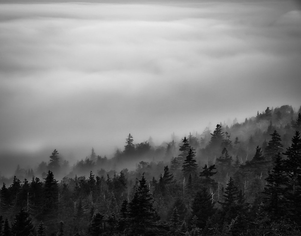 Morning Fog, Acadia