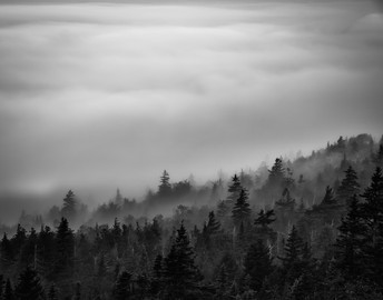 Morning Fog, Acadia
