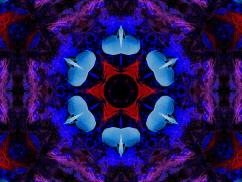 Swan_RedStream_KLADSS_15_1000.jpg