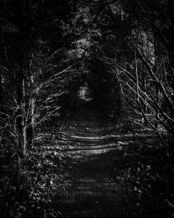 Lonely Path III