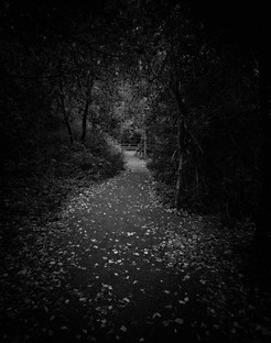 Lonely Path II