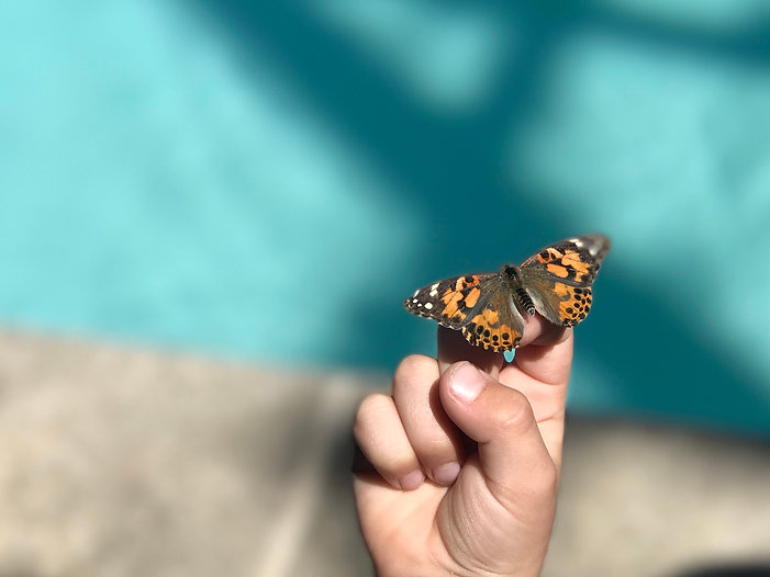 Buttefly Release - Painted Lady.jpg