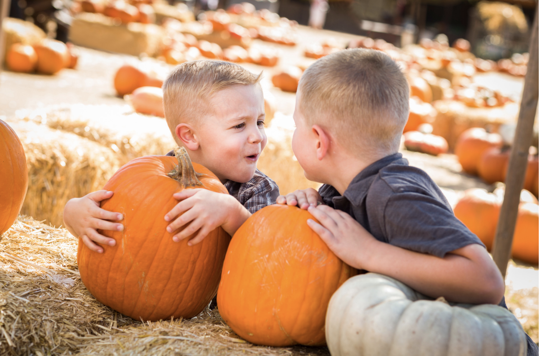 Boys Making Faces with Pumpkins Stock