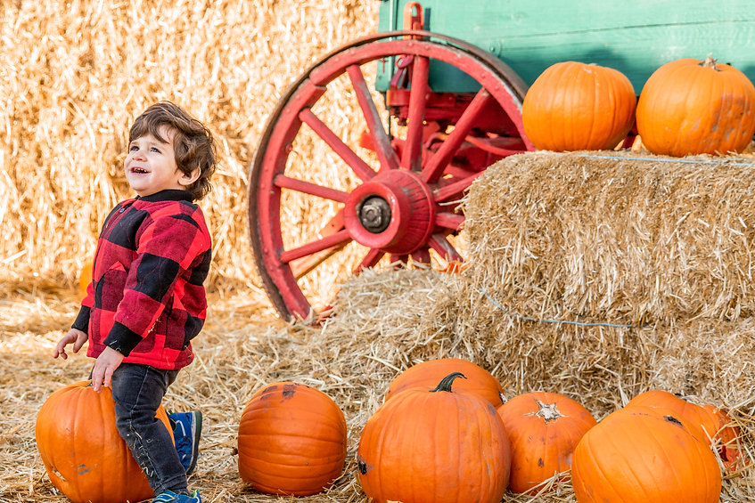Boy by Pumpkins.jpg