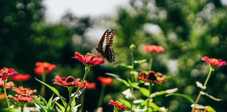 Butterfly & Flowers.jpg