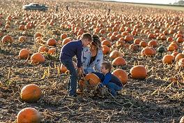Family getting pumpkins.jpg