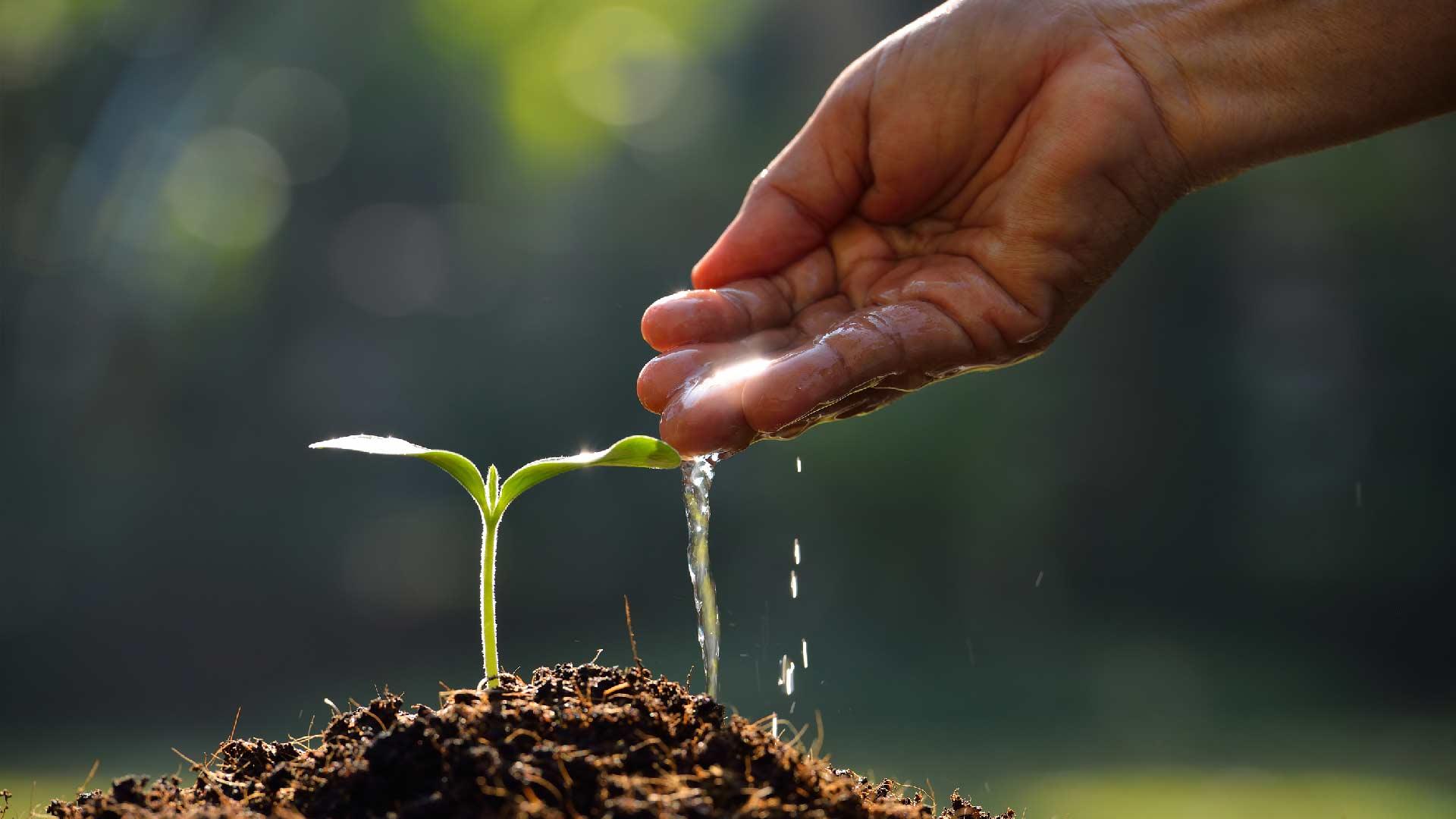 letting-seed-grow.jpg