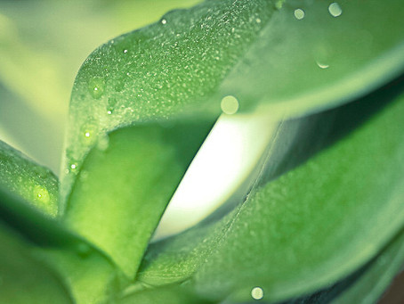שתי תמונות על רקע צמחים אחרים