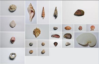 塩の浜の貝殻
