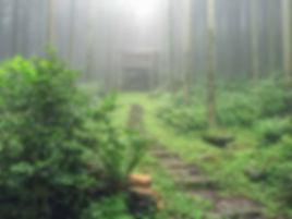 自然回帰の森